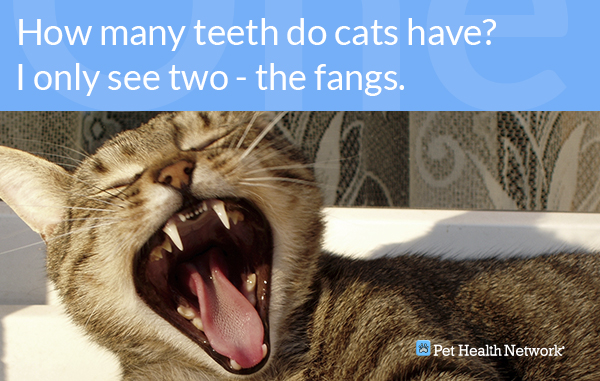 Dr  Ernie's Top 10 Cat Dental Questions    And His Answers!