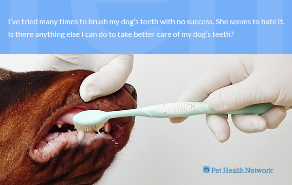 Dr Ernie S Top 10 Dog Dental Questions And His Answers