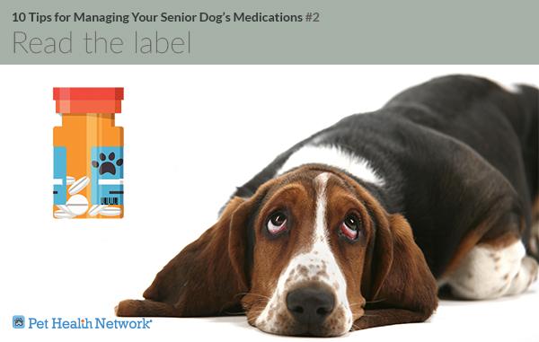Cachorro com frasco de comprimidos