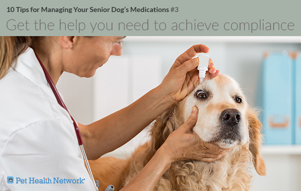 Dog getting eye drops