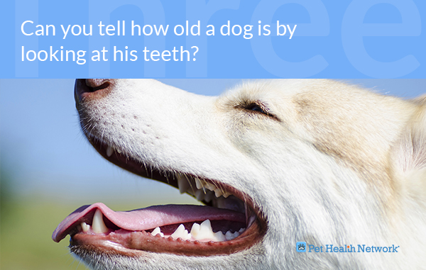Do Dogs Get New Teeth At  Years