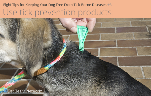 Using tick prevention on dog