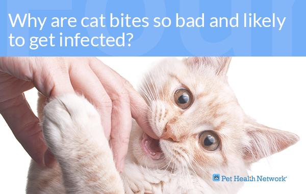 Dr Ernies Top 10 Cat Dental Questions And His Answers