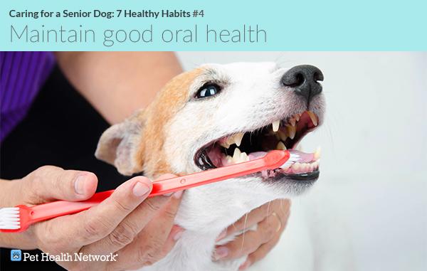 Man brushing his dog's teeth