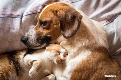 Dog and Cat Together  on Bed