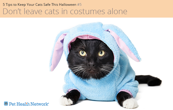 Cat in a bunny costume