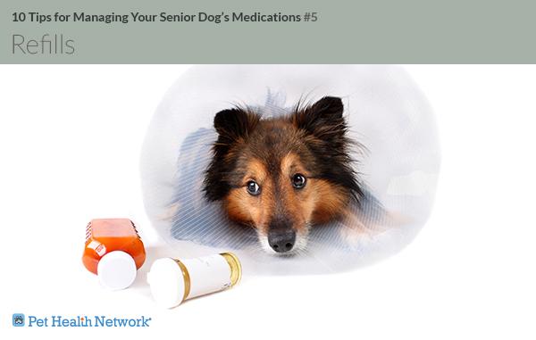 Cachorro com cone próximo a comprimidos