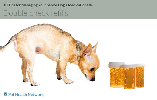 Cachorro olhando frascos de comprimidos