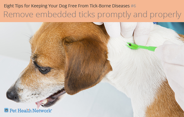 Removing a tick from a dog