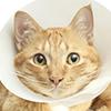 Cat wearing a cone