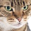 Concerned cat