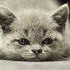 Kitten depressed