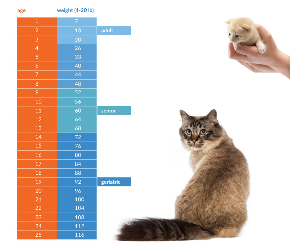 How Old Is Your Cat In People Years