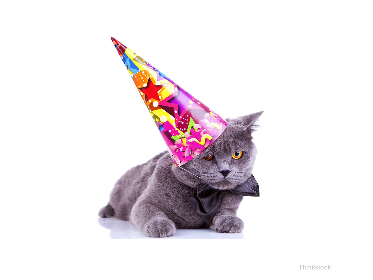 Oldest Cat in the World Enjoys 24th Birthday!