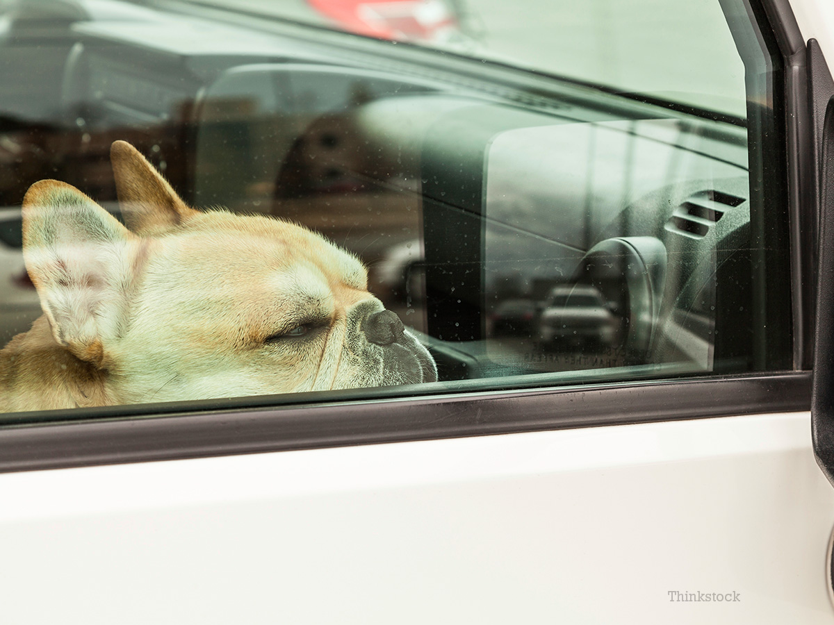 6 Dogs Perish in Canada after Being Left in a Hot Car