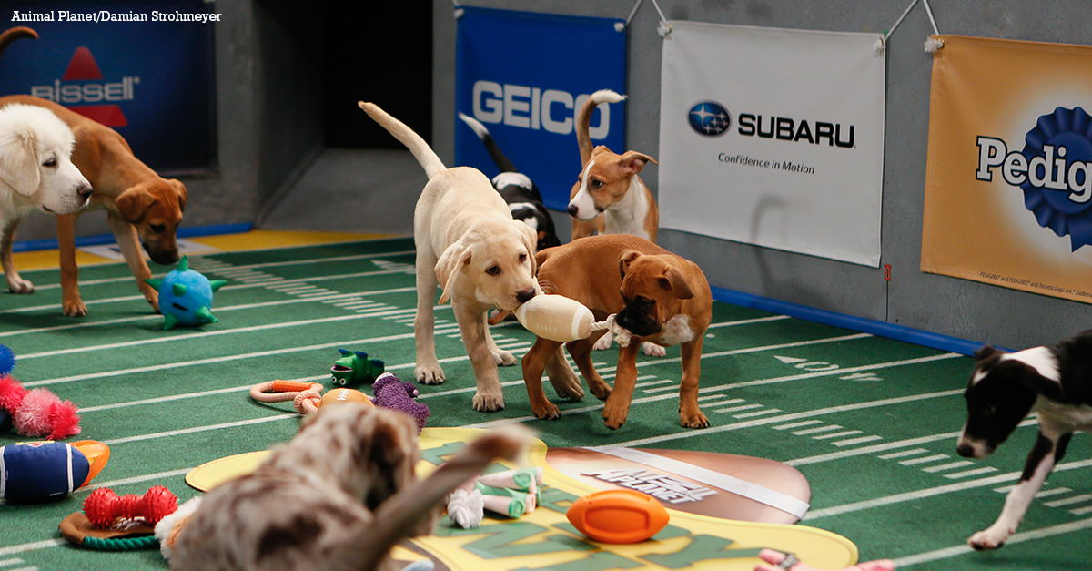 Puppy Bowl features Penguins and Keyboard Cat!