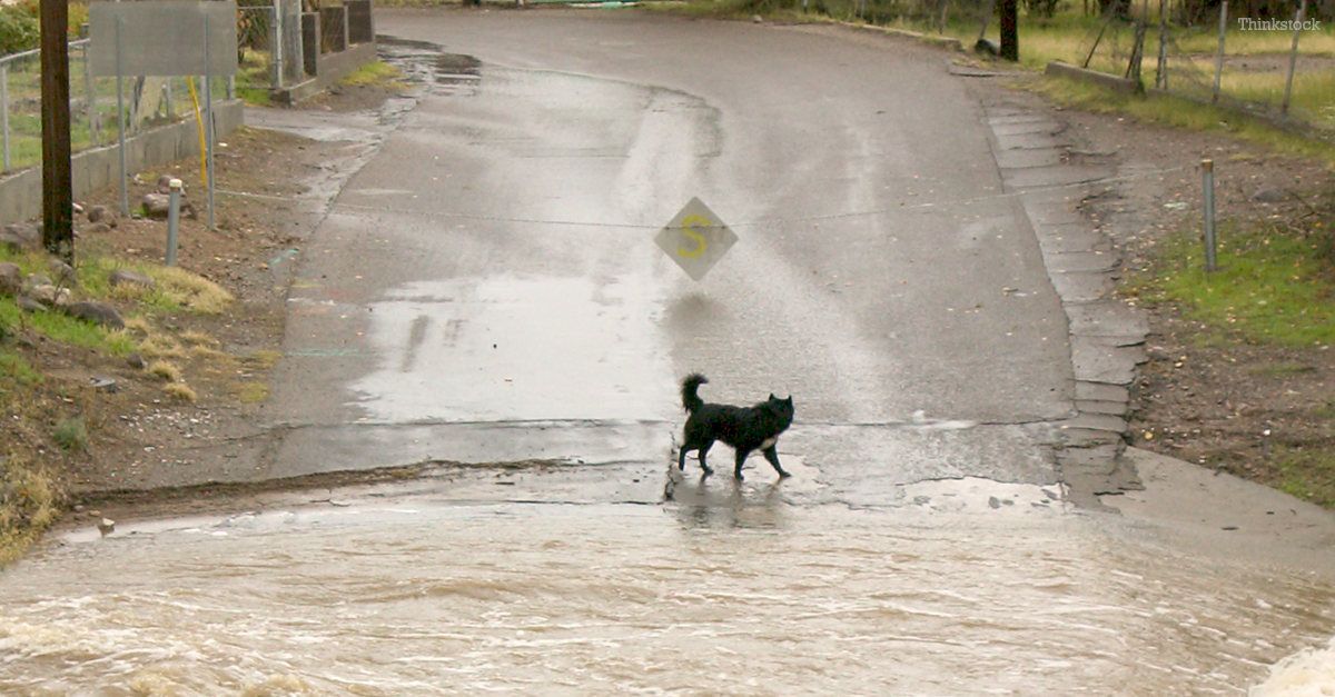 Dog Survives Washington Mudslide and Comforts Grieving Family