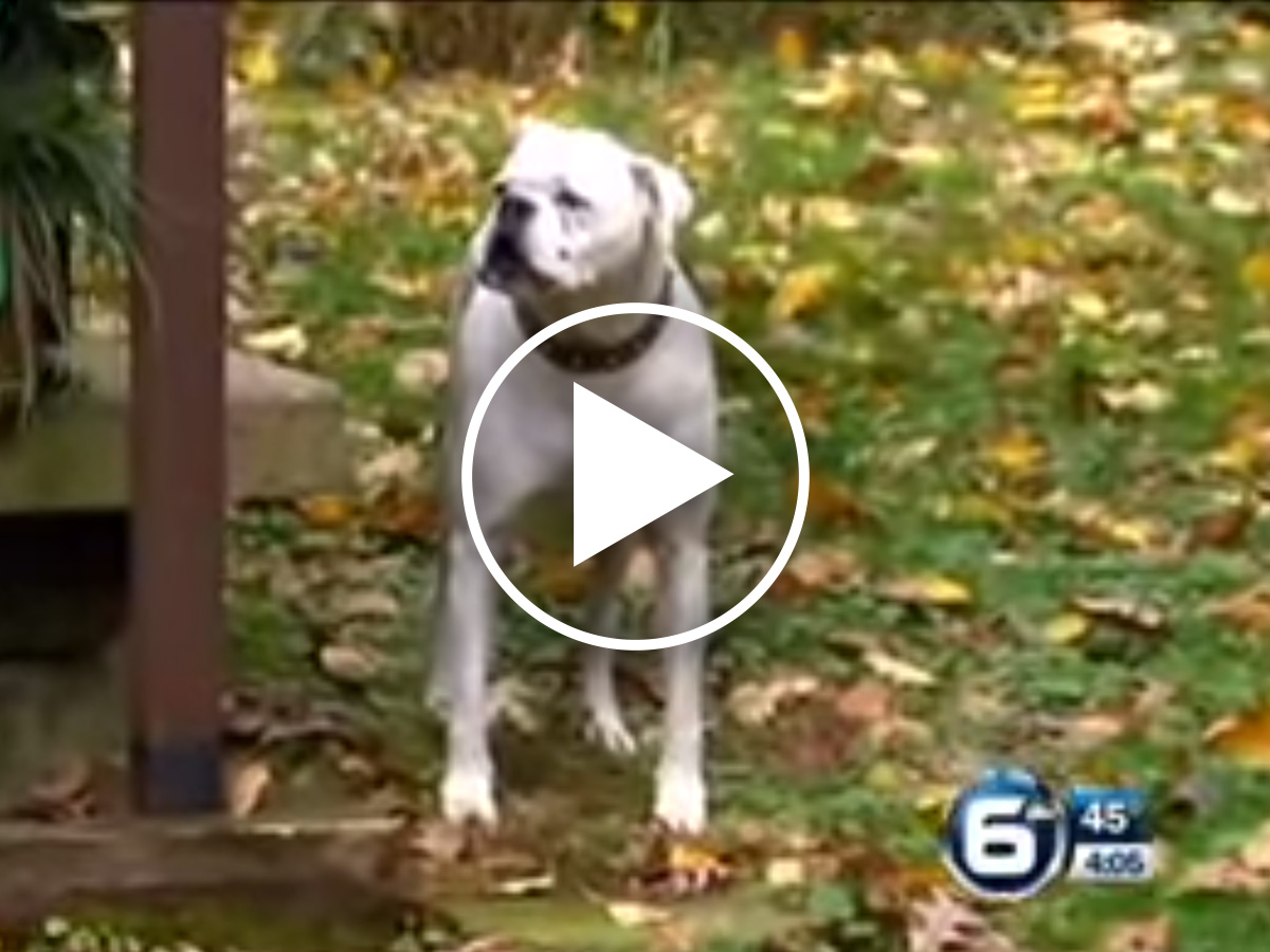 Disabled Dog Fights Through Pain to Save His Guardian's Life