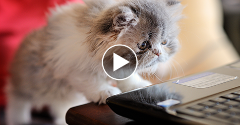 This Weeks Top 7 Cutest And Strangest Viral Pet Videos