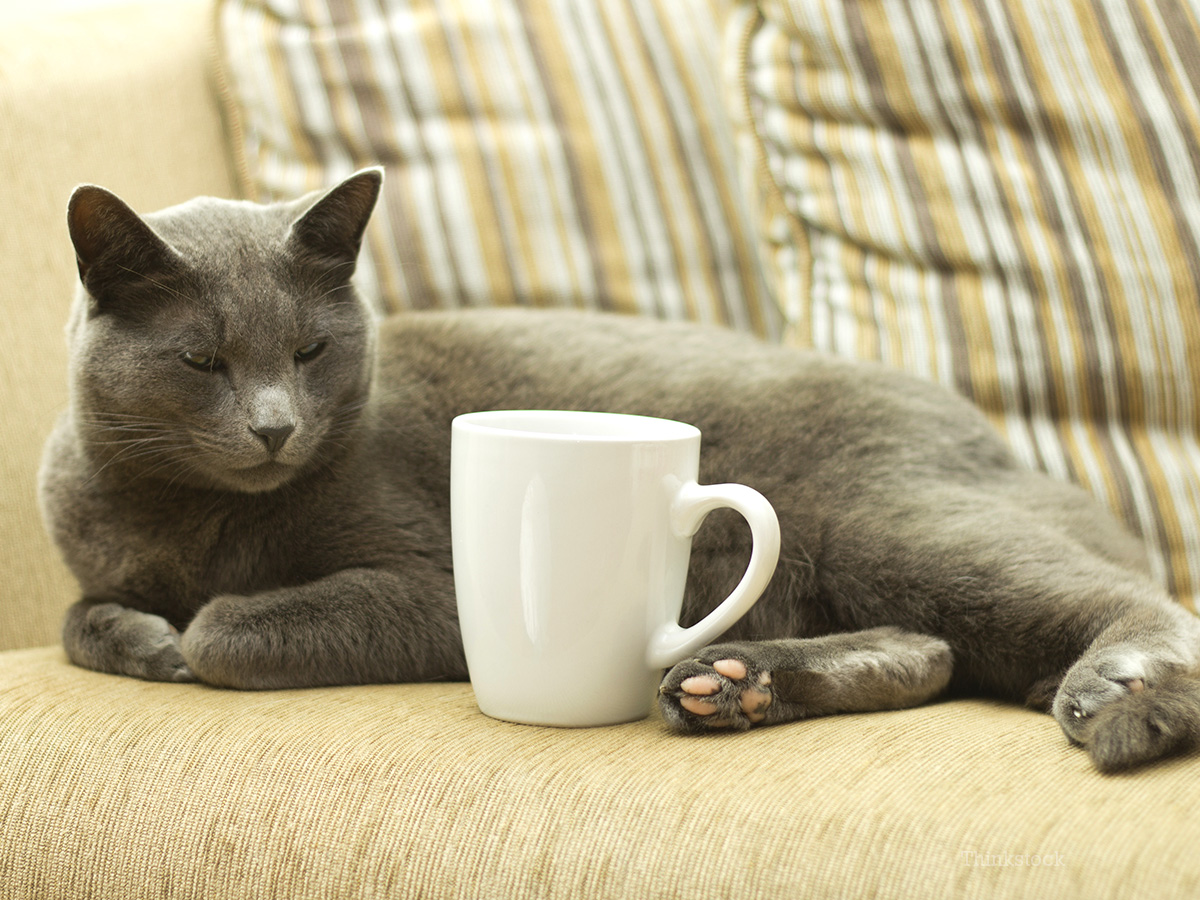 Would You Like a Cat with That Coffee? Yes Please!