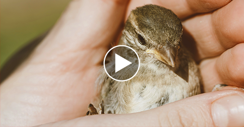 Lost Baby Bird: What Happens Next Will Give You Feel-Good Chills!