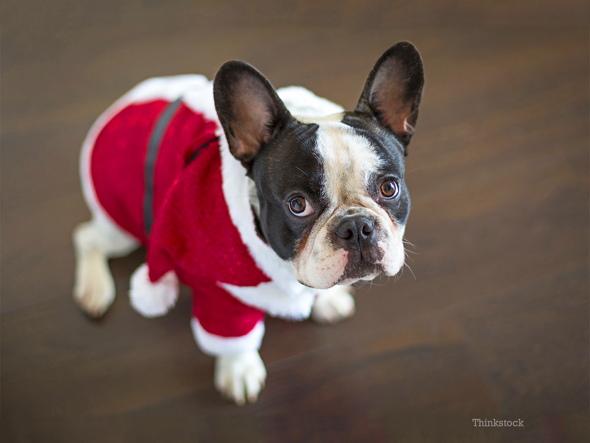 These Pets Got Into The Holiday Spirit