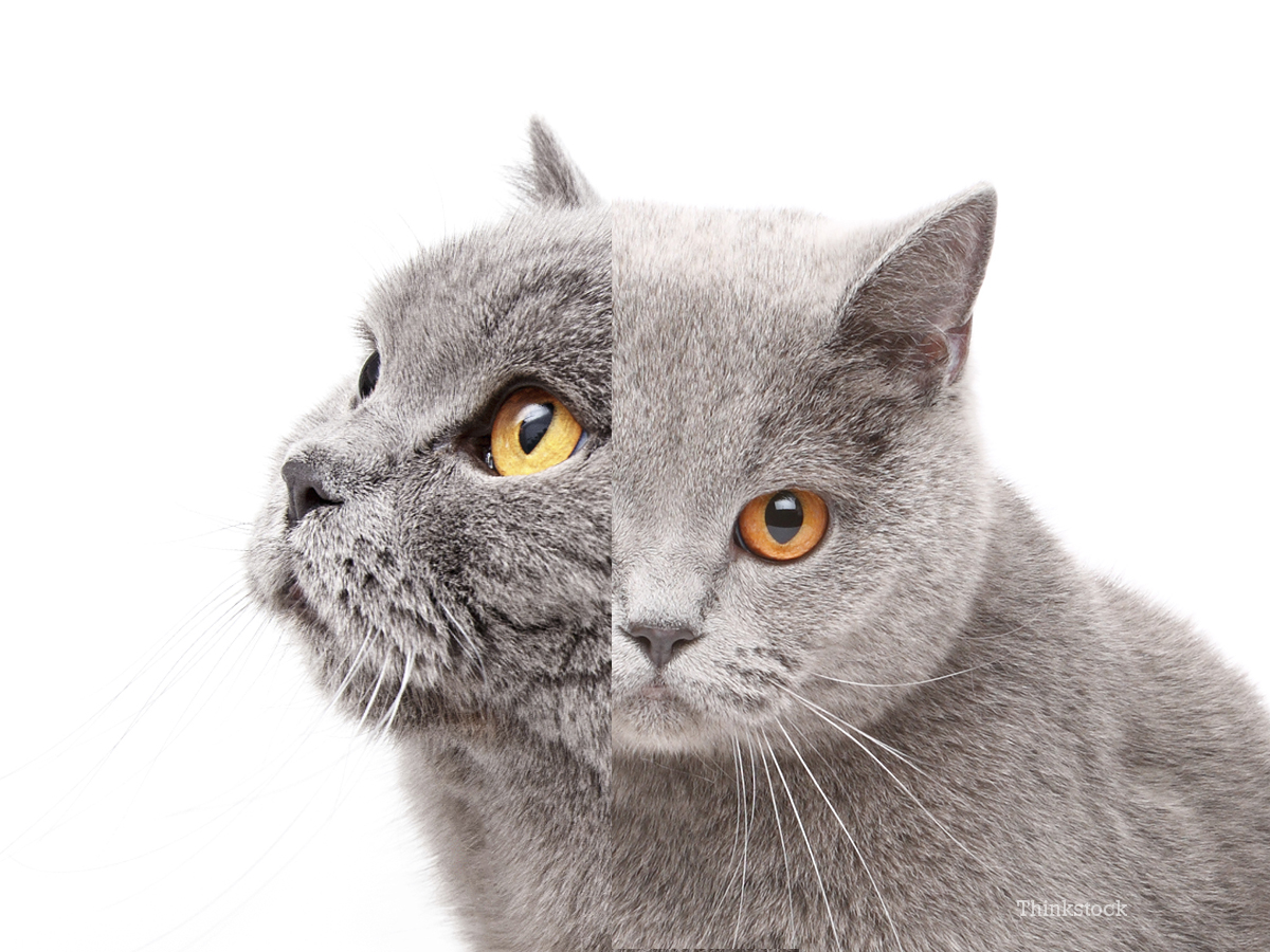 meet frank and louie the two faced cat