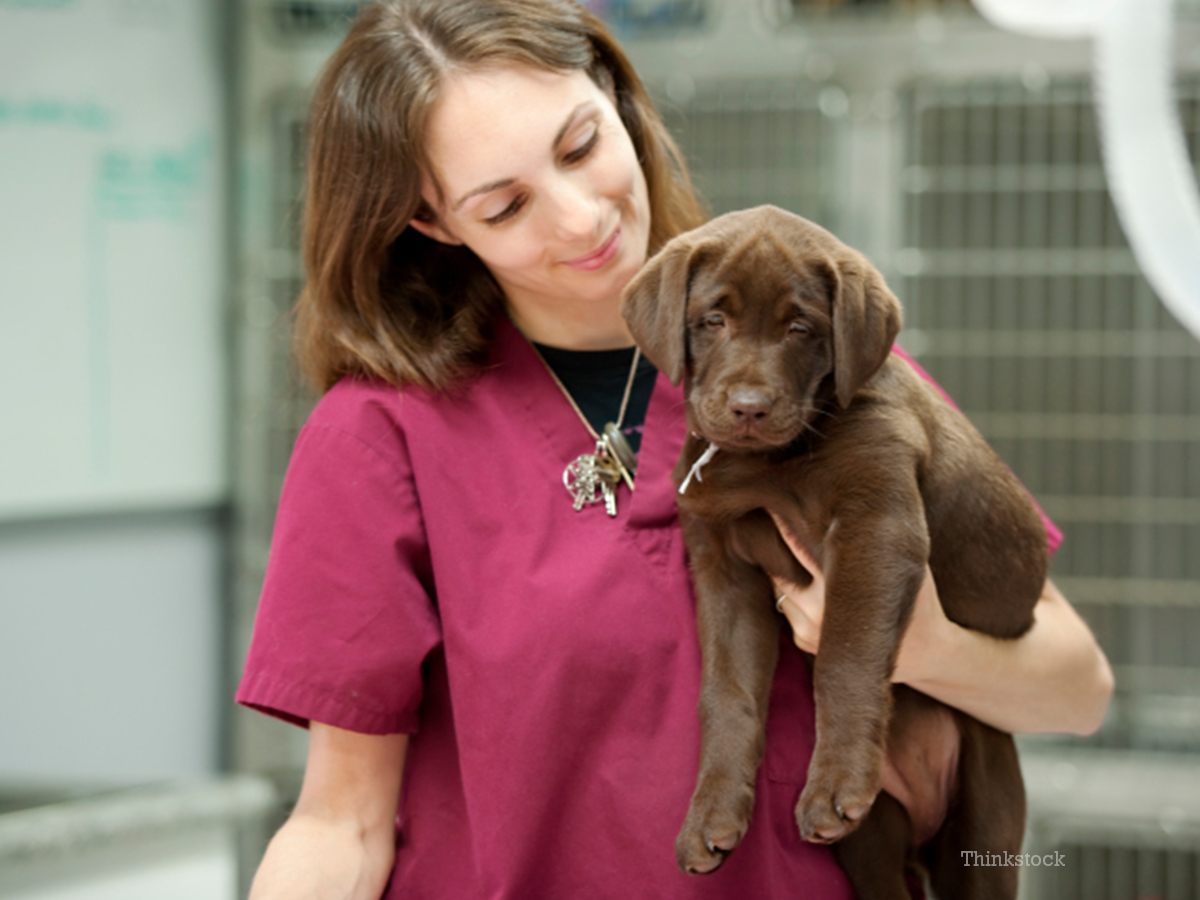 Paraveterinary worker