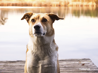 Sad dog sitting on dock