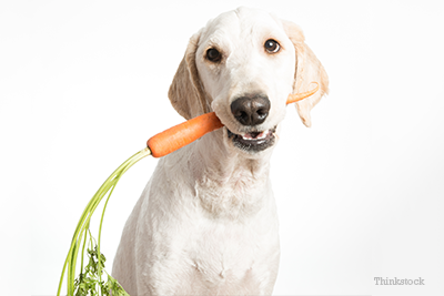 Dog with carrot in mouth