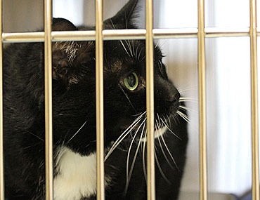 Squishy Lump On Cat S Neck : Feline Lipomas - Noncancerous Tumors