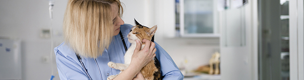 Veterinarian and cat
