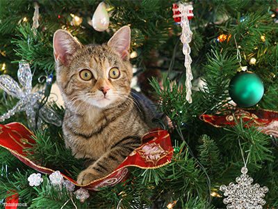 how do i keep my cat out of the christmas tree