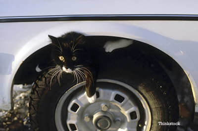 Cat under car looking up