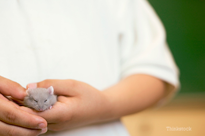Person holding a mouse