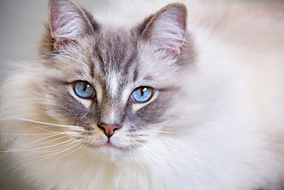Chronic Kidney Disease What Does Kidney Failure In Cats Really Mean