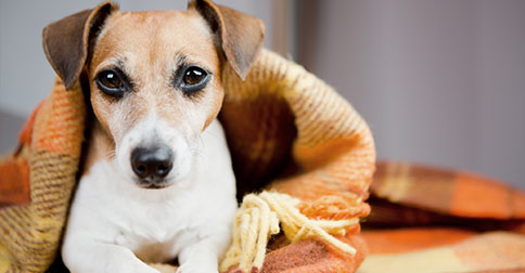 5 Common Causes of Limping in Dogs
