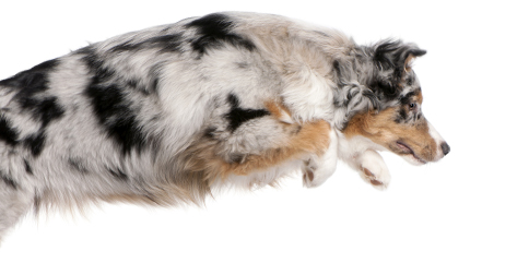 7 Surprising Ways To Help Your Pet Lose Weight And Why It S Important