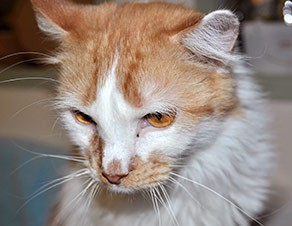 How Can I Get Rid Of Cat Allergies