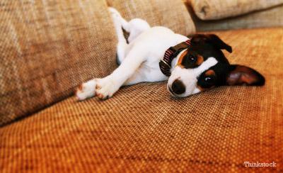 Loss Of Pet Dog