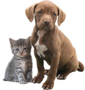 Pyometra: Why You Should Spay Sooner Than Later
