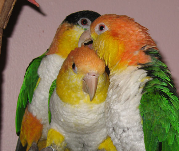 January Is National Adopt A Rescued Bird Month