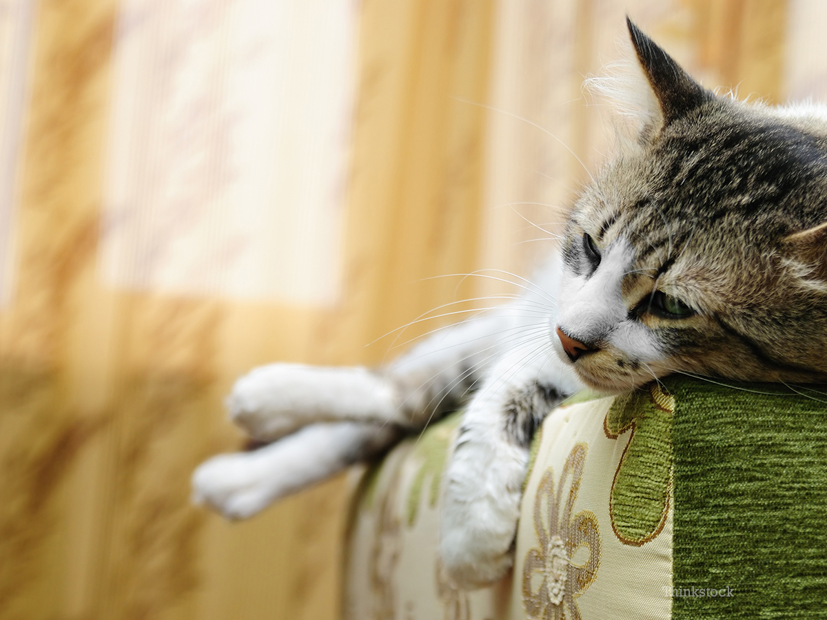 why do cats talk so much