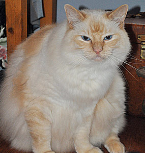 Cat Vomiting Diarrhea Bloody Stool Feline Inflammatory