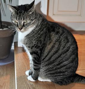 kit cat clock amazon
