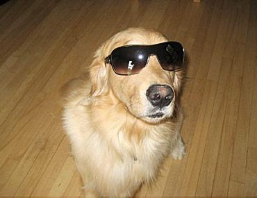 Symptoms Of High Eye Pressure In Dogs