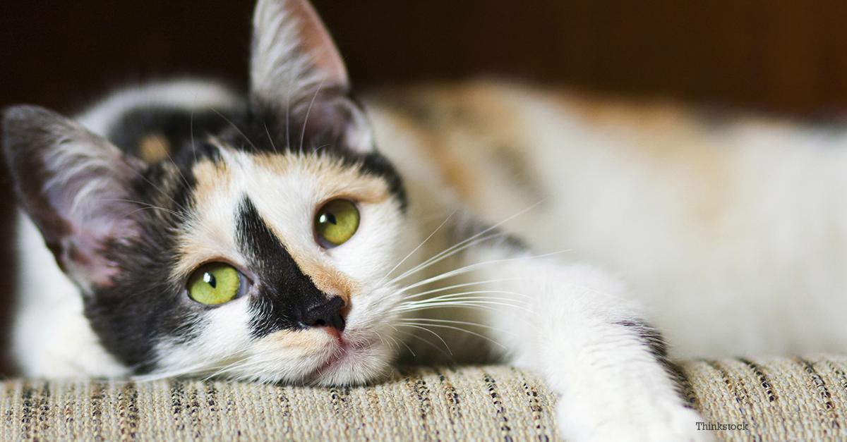 Feline Immunodeficiency Virus - fighting cat disease