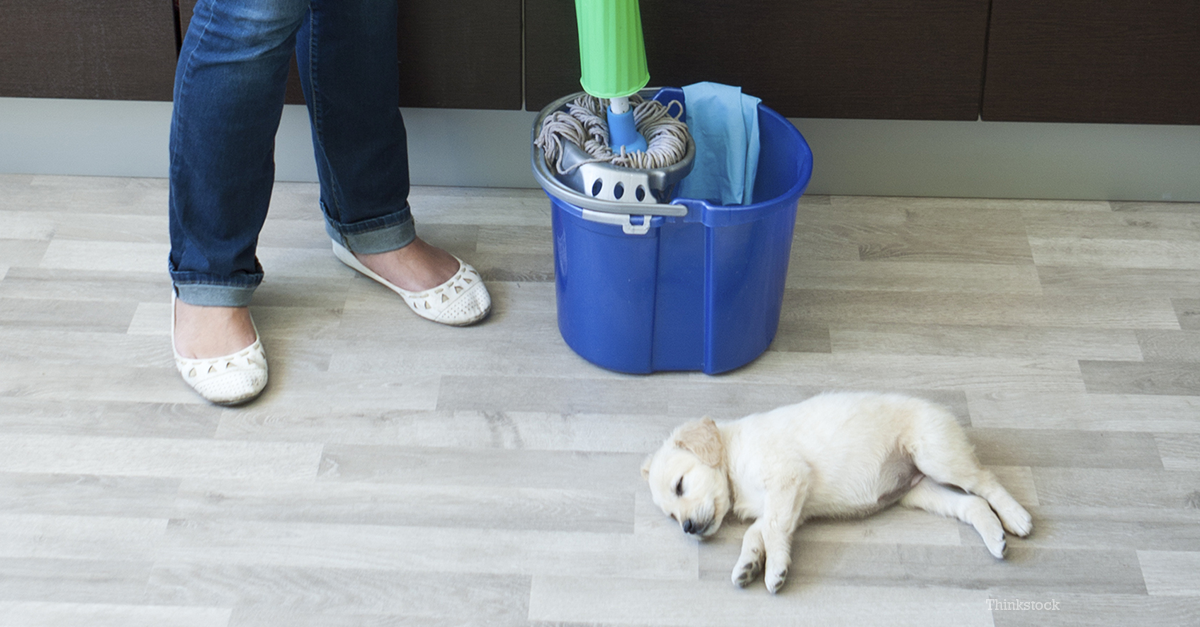 Household Cleaning Products and Your Pet: What You Should