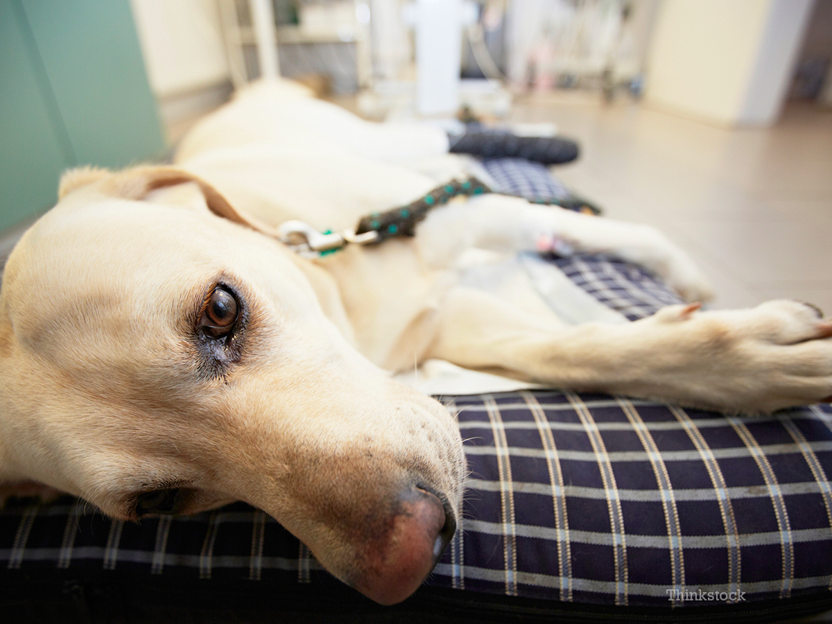 How Do I Prepare For My Dog Or Cat Having Surgery