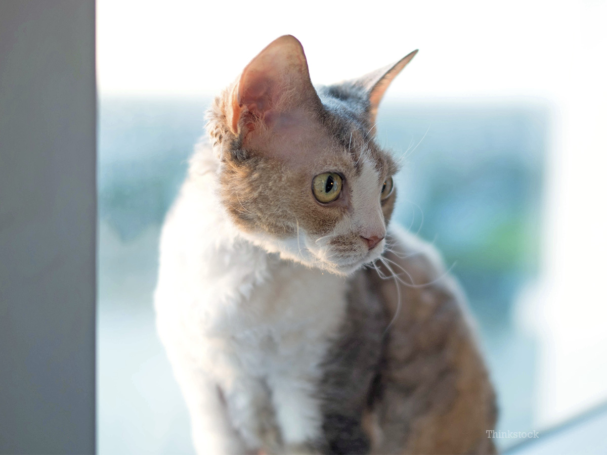 The cat has constipation. What to do immediately, and what is prevention 39